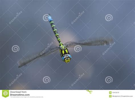 Dragonfly Flying In The Wind Stock Photo Image 13412570