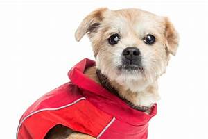 Cloudiness in Dog's Eye | Canine Cataracts
