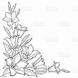 Outline Corner Flower Leaf Vector Bouquet Bluebell Bellflower Bell Bud Campanula Illustration Isolated Drawing Floral Pattern Drawings Clipart Blossom Vectors sketch template