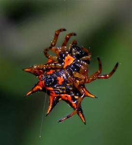 Vietnamese Spiders | Along Came a Spider | Pinterest