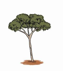 How to Draw a Gum Tree: 8 Steps (with Pictures) - wikiHow