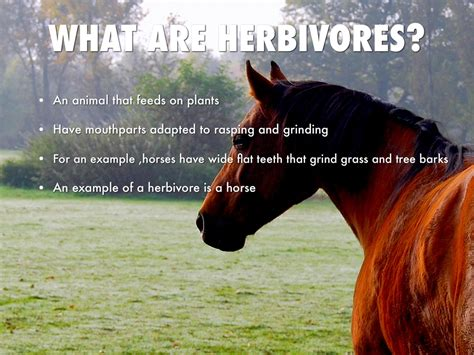 horses herbivores title rasping mouthparts plants grinding