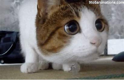 Cat Wondering Cats Gifs Animation Animations Kittens