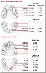 Tooth Eruption Chart  U2013 Drbunn Com