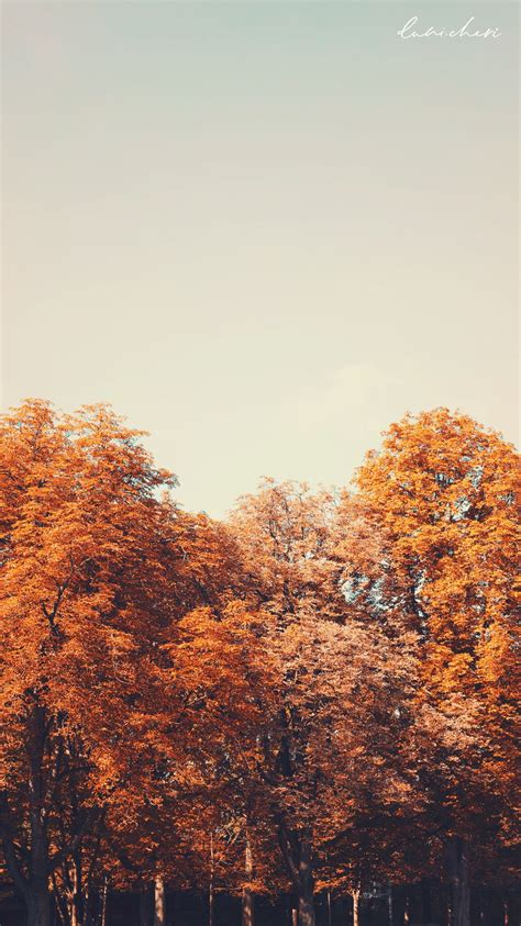 Aesthetic Fall Backgrounds Iphone by Free Autumn Wallpaper Desktop Mobile Free
