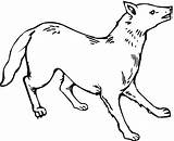 Coyote Coloring Printable Coyotes Bestcoloringpagesforkids Colouring Animal Condor Getcoloringpages Realistic sketch template