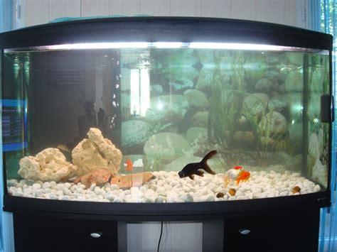 300l poissons japonais