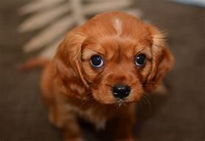 Puppy dog eyebleach : Eyebleach