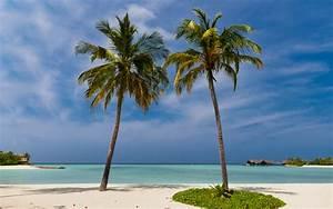 Bilder Von Palmen : bilder von malediven strand natur tropen palmengew chse 2560x1600 ~ Frokenaadalensverden.com Haus und Dekorationen