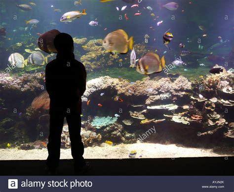 nausicaa aquarium national sea center boulogne sur mer pas de calais stock photo royalty free
