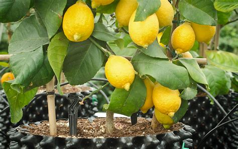 fruit in pot fruit and vegetables air pot 174