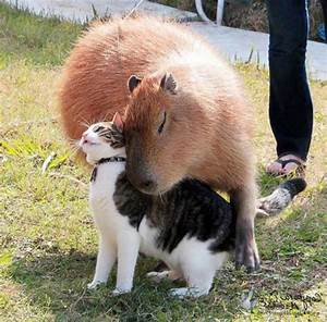 16 Unlikely Animal Friendships That Will Make You Melt