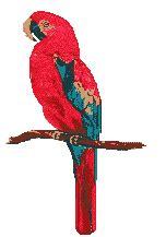 parrot   flamingo  parrot rescue brecksville