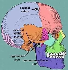Zygomatic arch