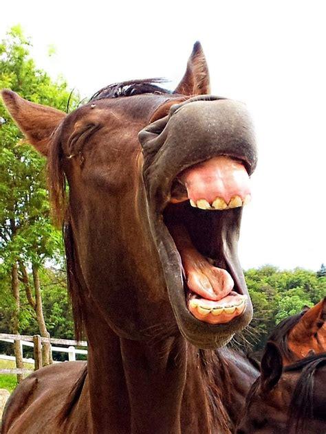 teeth horse floating faq