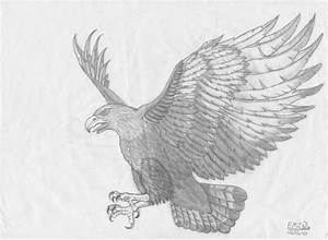 How to draw flying hawks