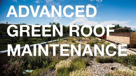 advanced green roof maintenance  living architecture