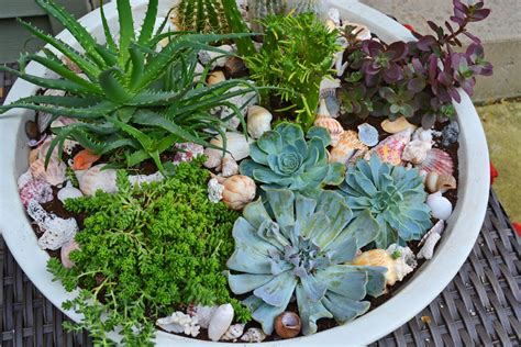 Succulent Container Garden How To Plant Succulents In A