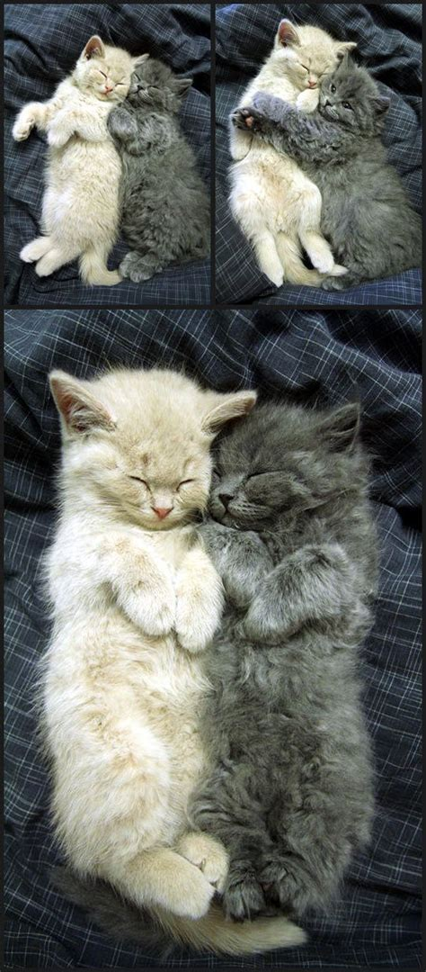 cuddling cats pictures   images  facebook