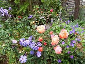 Rosen Und Stauden Kombinieren : ghislaine de feligonde wie kombinieren seite 1 rund um die rose mein sch ner garten online ~ Orissabook.com Haus und Dekorationen