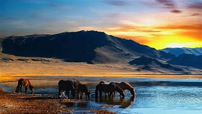 Horses Sunset Wild Horse Mountains Nature Wallpapers