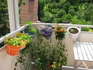 Einfaches Gemüse Für Den Garten : gem se f r balkon welche pflanzen sie wie anbauen k nnen ~ Lizthompson.info Haus und Dekorationen