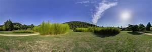 Bambus Vernichten Tipps : bambus anpflanzen tipps tricks bambus freunde ~ Whattoseeinmadrid.com Haus und Dekorationen