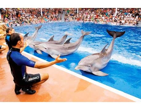 see larger tickets to marineland mallorca
