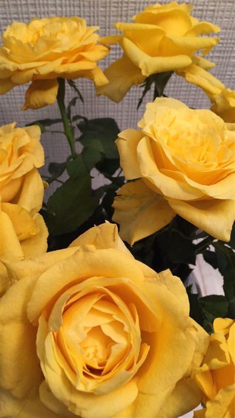 menakjubkan  tumblr gambar aesthetic bunga sugriwa gambar