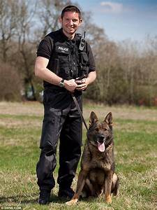 Somerset police dog catches car thief after tracking him ...