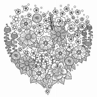 Coloring Flowers Heart Flower Adults Vegetation Blumen