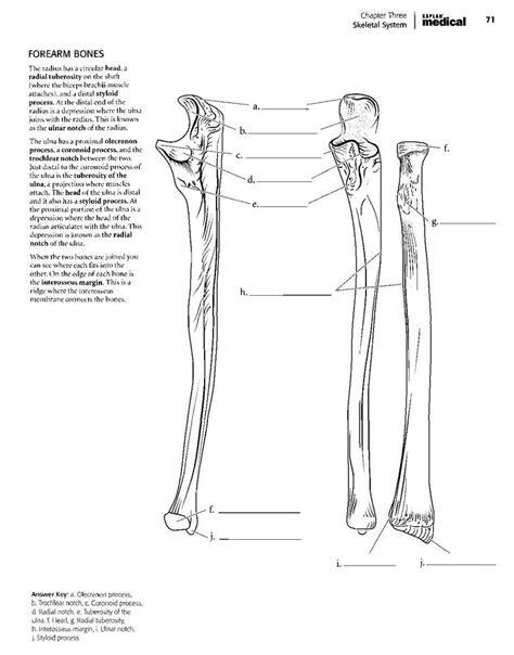 kaplan anatomy coloring bookpdf boudli anatomy