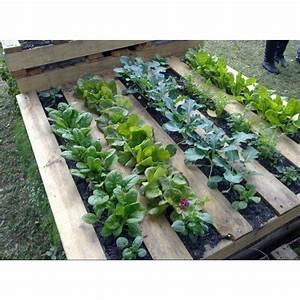 Veggie patch My little cottage Pinterest