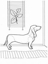 Coloring Dachshund Waiting sketch template