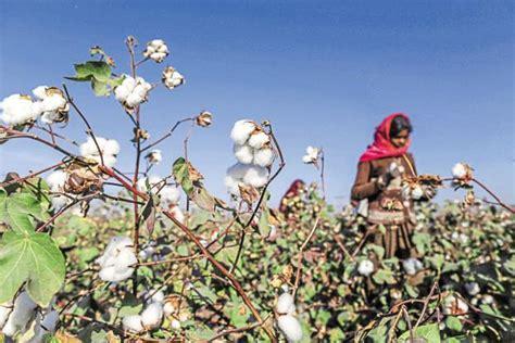 Monsanto Supreme Court by Supreme Court Upholds Monsanto S Patent Claim On Bt Cotton