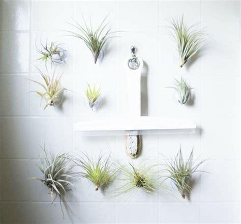 decoration murale plante la plante tillandsia comme d 233 coration d int 233 rieur