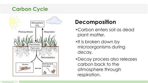 Boar Cycle Diagram by Carbon Cycle Lesson Plan A Complete Science Lesson Using