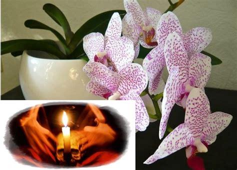 Tāpēc es izmetu ārā visas orhidejas! Var rasties nopietnas problēmas.