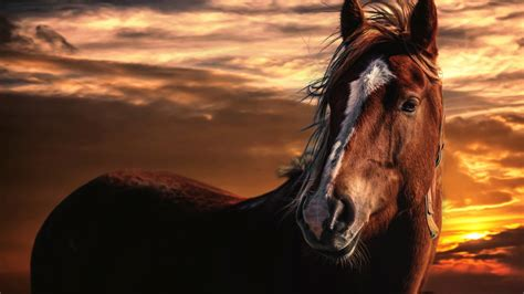 Paint Horse Wallpaper (40+ Images