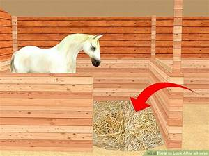 how to look after a horse with pictures wikihow With cost of running a horse boarding stable