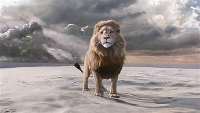 Narnia Lion Chronicles Aslan Wardrobe Witch Caspian