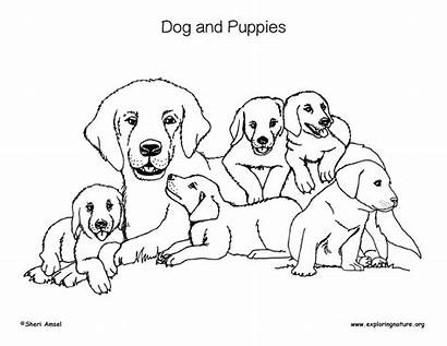 Puppies Coloring Dog Dogs Sponsors Wonderful Support