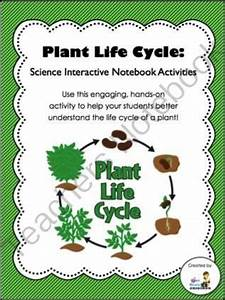 Third Of Life : plant science interactive notebooks and life cycles on pinterest ~ Orissabook.com Haus und Dekorationen