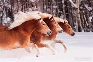 10 Fotos De Cavalo Mais Lindas Que Voc Viu E Como Foram