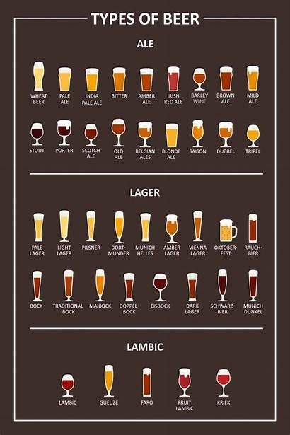Beer Types Different Chart Styles Difference Lagers