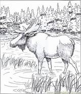 Moose Coloring Pages Printable Alaska Colouring Alaskan Animal Wood Realistic Adults Bing Books Patterns Adult Coloringpages101 Sheets Burning Drawings Printables sketch template