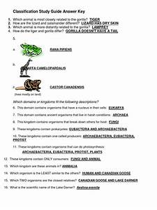 Classification Study Guide Answer Key Docx