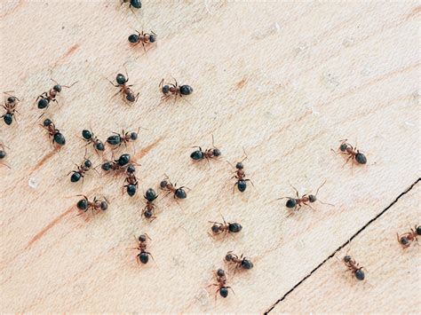How To Get Rid Of Ants Inside The House by How To Get Rid Of Ants With 3 Ingredients Realestate Au
