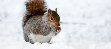 What Damage Can Squirrels Cause Your Property