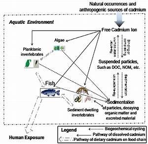 Toxicity of Waterborne Cadmium to Saltwater Aquatic ...